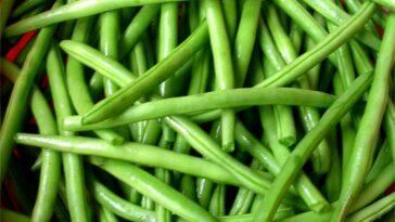 Judías verdes: cómo blanquearlos y congelarlos de la mejor manera